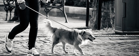 Walking Dog With A Flexi Leash