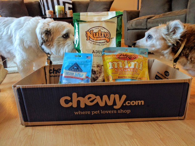 Two dogs, a sheltie and shihtzu, smelling food and treats in a box from chewy.com