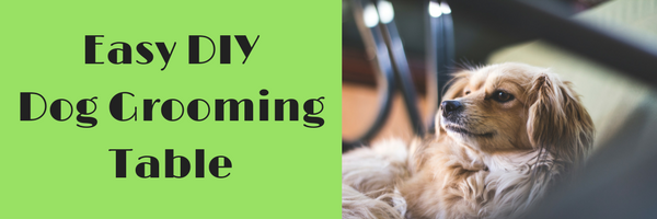 Dog grooming table header