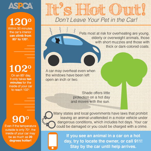 ASPCA Hot Vehicle Infographic